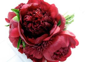 """""""Dark Red Peonies""""  [Peonies are excellent wedding flowers. It is popular to create monochromatic (all one color) bouquets from this mix of flowers.  The combination of pink roses, pink ranunculus, and pink peonies, especially in a tight, round shaped bouquet is very beautiful. They are grown in Holland and California.]  'h4d' 120814"""