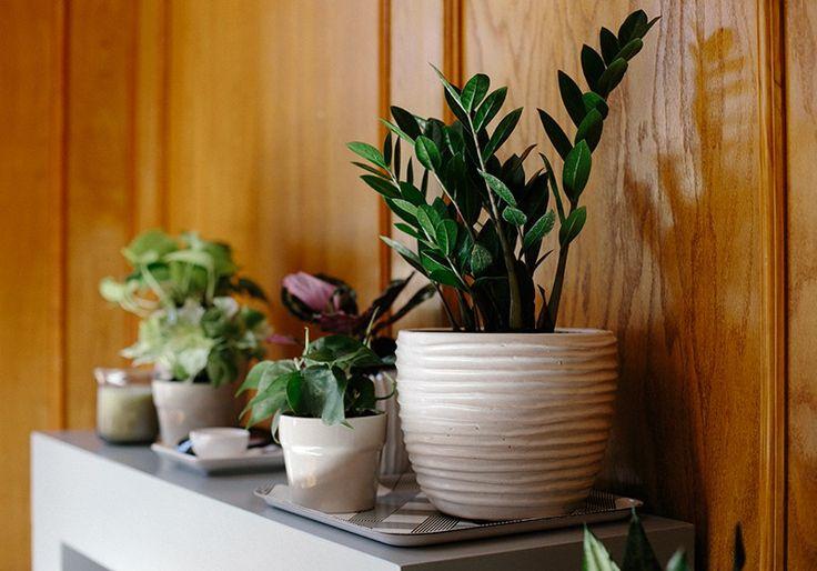 17 best pallet hanging baskets images on pinterest fall for Low maintenance indoor hanging plants