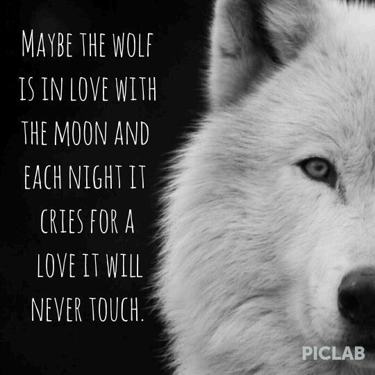 ~Wolf Quotes~ Maybe the wolf is in love with the moon and each night it cries for a love it will never touch.