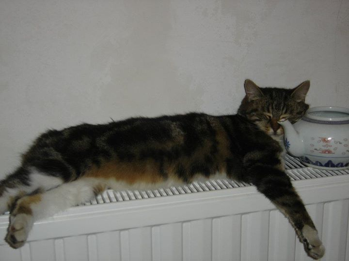 Connu 113 best =^..^= On the heating images on Pinterest | Funny cats  PN95