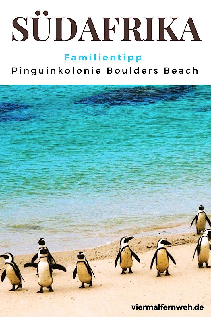 Zwei Pinguinkolonien gibt es in der Nähe von Kapstadt. Wir haben uns beide angesehen. #familienreise #südafrika #pinguine #kapstadt #reisenmitkind #travel