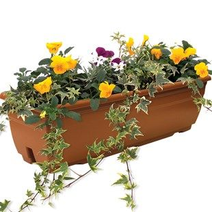 mixed Floral 1 Pre Planted Trough Beautiful mixed Floral for your gardening pleasureEach trough contains compost, FREE plant hydrator. Care instructions are included.Baskets, containers  troughs, pre-planted with Red trailing Geraniu http://www.MightGet.c