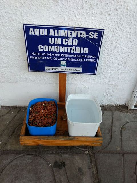 Fica Cãomigo: Água e comida para cães de rua - exemplos!