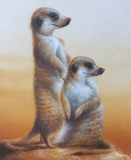 David Finney - Wildlife Artist & Illustrator | Animals