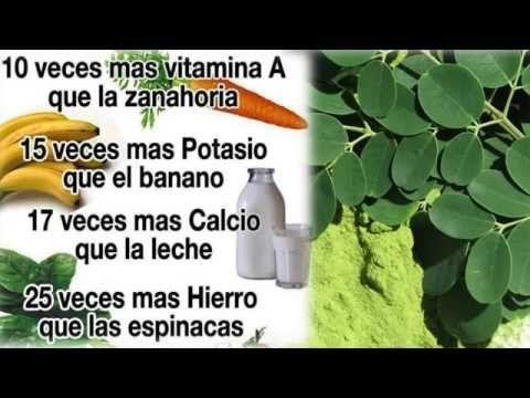 Para Que Sirve La Moringa - Propiedades, Beneficios Y