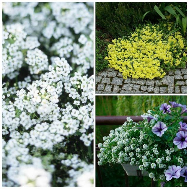 Jakie Kwiaty Posadzic W Maju By Kwitly Do Poznej Jesieni Czyli Kwiaty Na Balkon I Taras Najdluzej Kwitnace D Hanging Baskets Herbs Plants