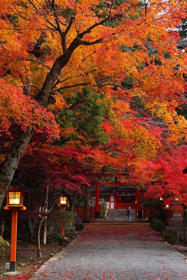 Kyoto, Japan via 大原野神社の紅葉 Autumn Leaves Fall through the Park walk