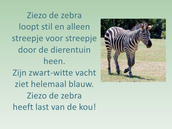 versje: Zebra heeft het koud