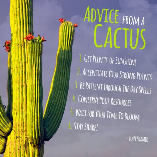Advice From A Cactus Free Yourself Tucson Quotes