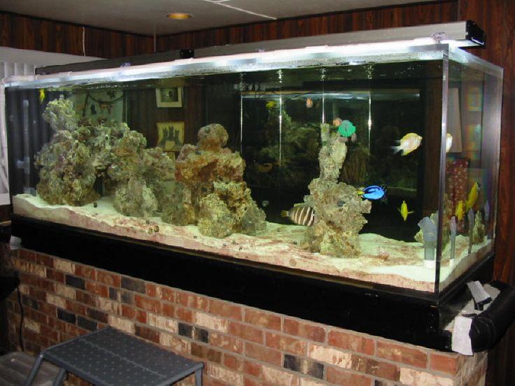 Masasi Guzel Turtle Tank Pinterest Betta Fish Tank