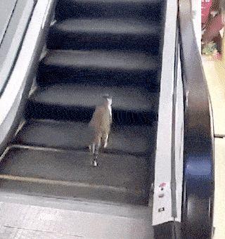 Cat Going Up