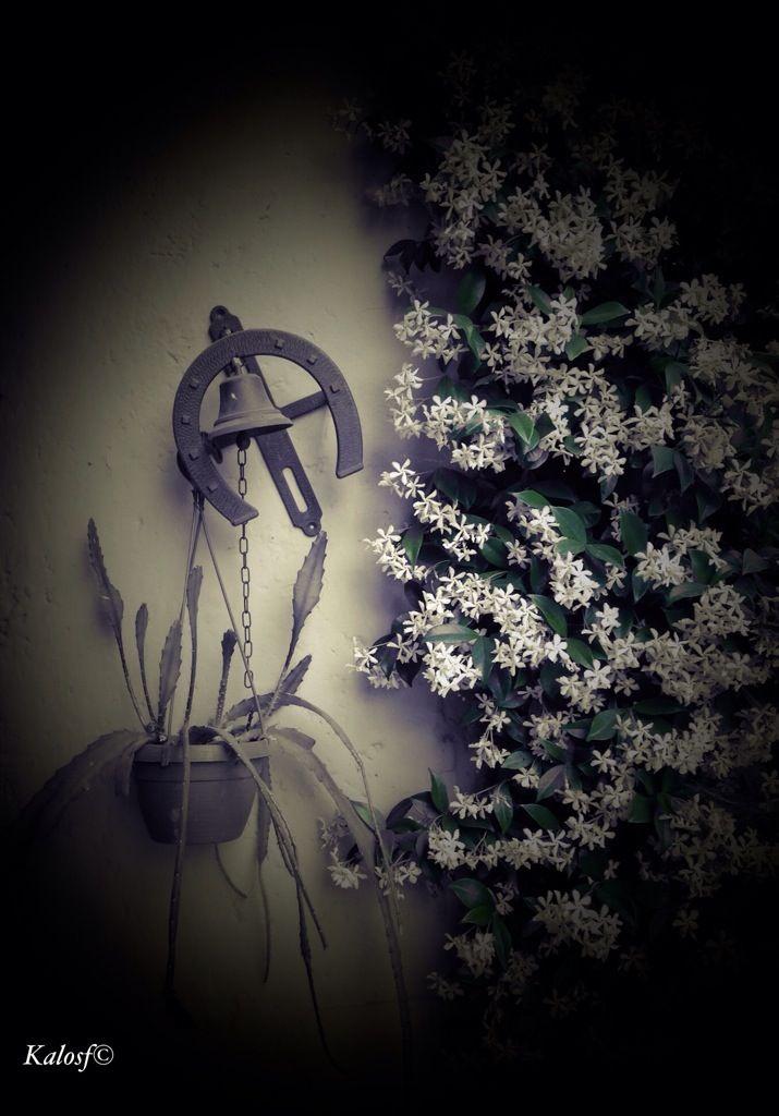 Con un pò di fortuna (e molto amore) saremo fioriti per sempre