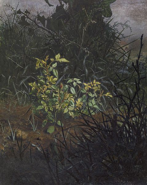 File:Léon Bonvin - Glimpse in a Thicket - Walters 371667 (2).jpg
