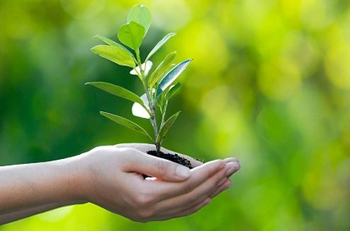 Fundação SOS Mata Atlântica distribui mudas de árvores pelas ruas de SP