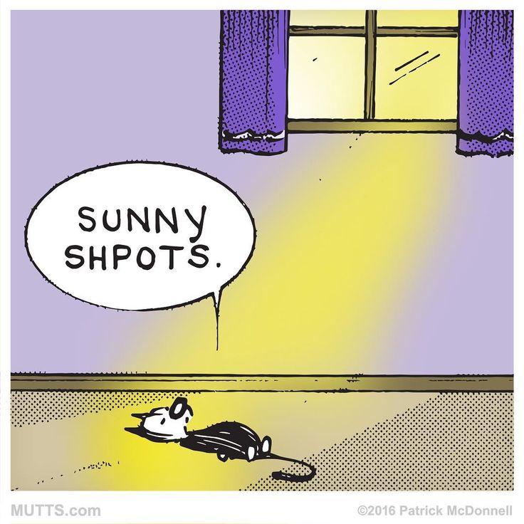 sunny shoots