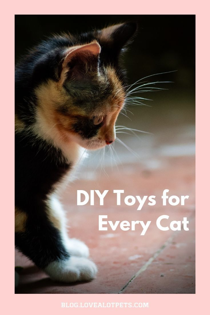 Diy Toys For Every Cat Cats