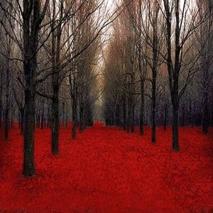 Red--LOVE THIS!  (~VIVID!~ All photos that have 'stand out' (vivid) colors, that are striking visually.~)