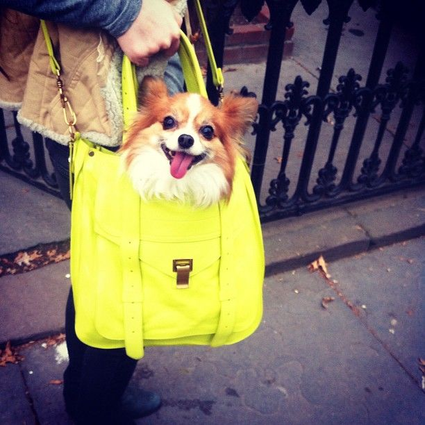 chicest dog bag ever: Adorable Dogs, Friends, Handbags, Neon, Goodman Instagram, Yellow Bags, Bergdorf Goodman, Dogs Bags, Happy Campers