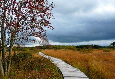 Naturparks in und um Köln: So wunderbar wild ist unser NRW | Ausflug- Kölner Stadt-Anzeiger