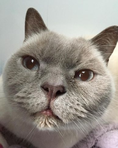 http://ift.tt/2veXrST funny looking cat that's at my local shelter