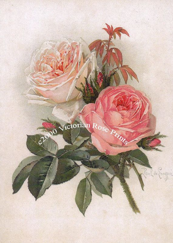 Paul de Longpre, Art Print, Bride and Pink Cabbage Roses, Shabby Chic Decor, Wall Art