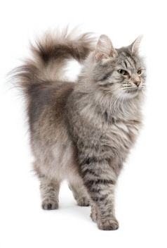 Homemade Cat Spray Cleaning Recipes