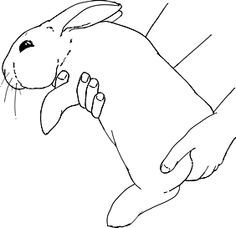 How to Pick Up a Rabbit that Hates It: A step-by-step, long term guide