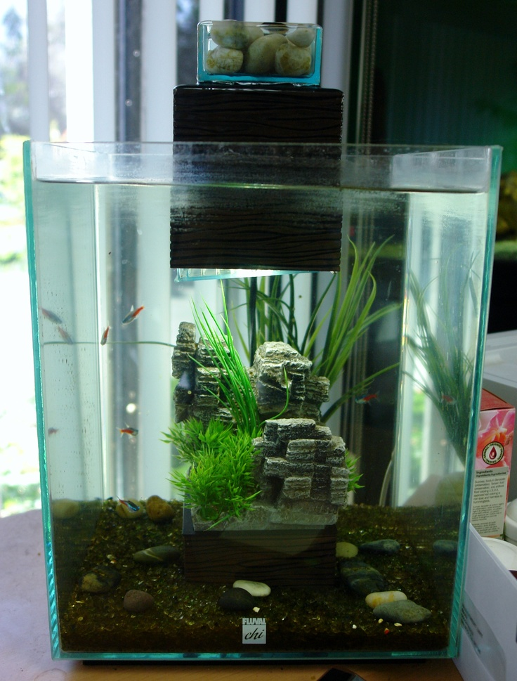 Simple fluval chi tank vivariums and terrariums for Betta fish tank ideas