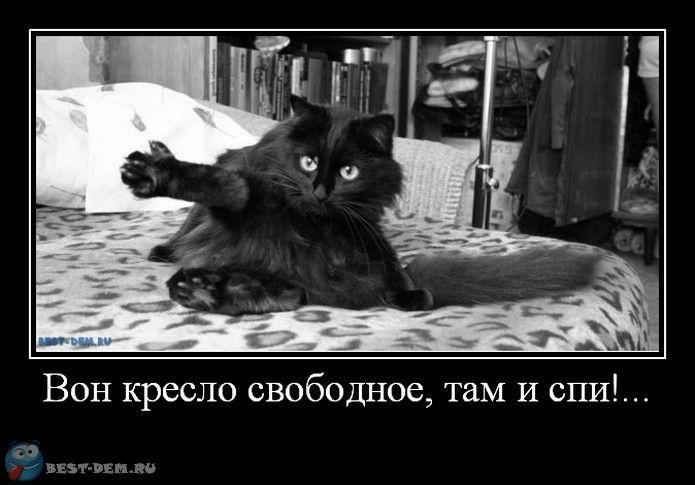 если не по теме - прошу прощения. Но котейка доставляет люто) — !~Записки психа~!