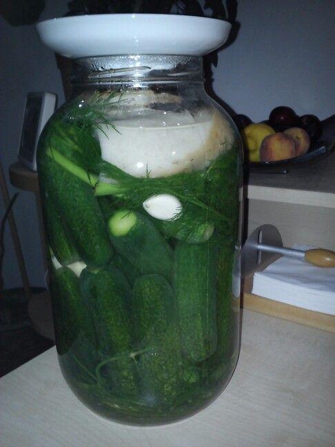 Az idei első kovászos uborka készül.