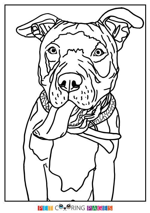 American Staffordshire Terrier Rescue Az