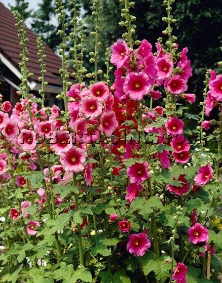 Memories of Grandmother's garden...