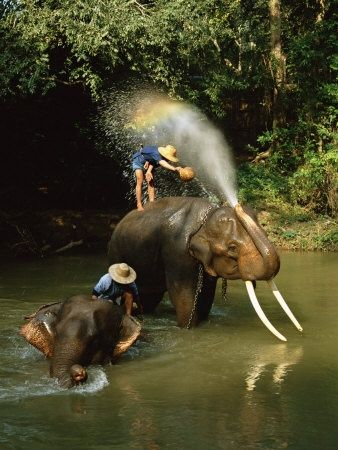 swimming with elephants in thailand. That would be most amazing experience of my life | See more about thailand elephants, elephants and swimming.