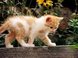 ▲ ! ▲   Pretty Kitty                                                     ~~~~~