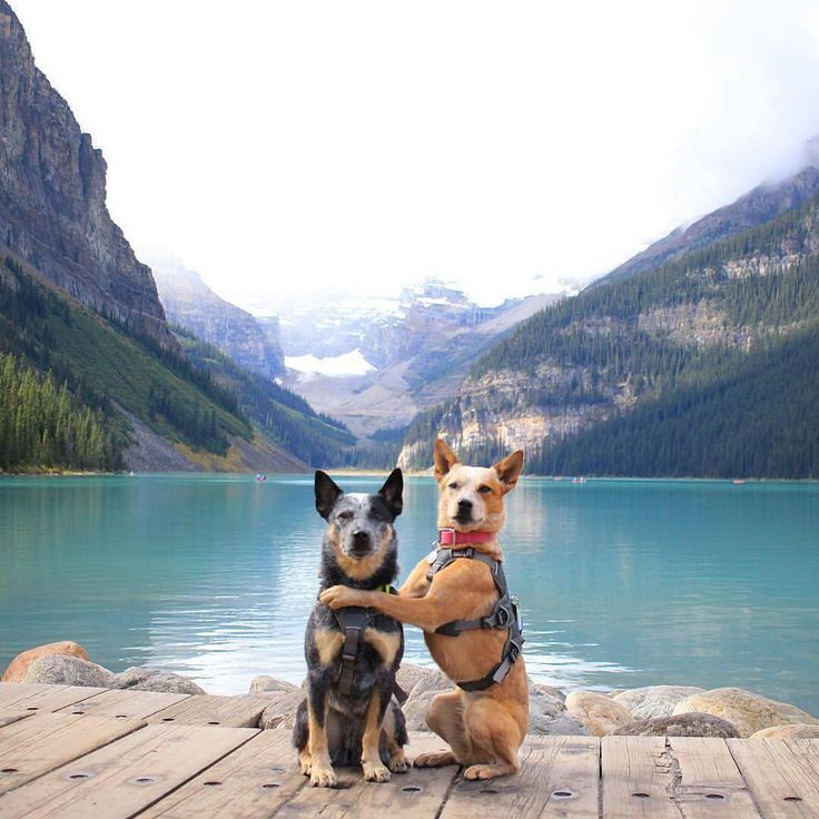 Tag your bestie! @west_coast_heeler_pack acting touristy at Lake Louise.   ten trees are planted for every item purchased: http://ift.tt/1gvwPkT  #nature #inspire #explore #outdoors #tentree