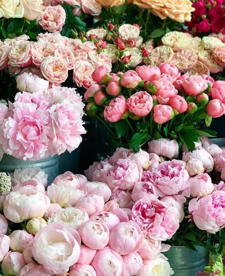 Peony Flower, My Flower, Flower Vases, Pink Blossom, Blossom Flower, Easter Flowers, Beautiful Flowers, Prettiest Flowers, Cut Flowers