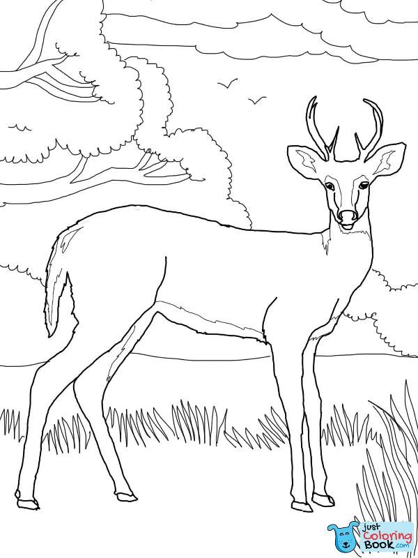 Whitetail Deer Coloring Page Free Printable Coloring Pages Inside