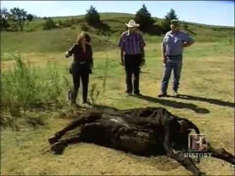 UFO Cattle Mutilations : Documentary on Alien Cattle Mutilation (Full Documentary)