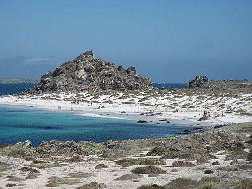 Playa tijeras, Isla Damas ,cHILE
