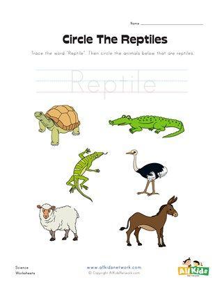 Circle the Reptiles Worksheet | 1st grade HS | Animals, Vertebrates ...