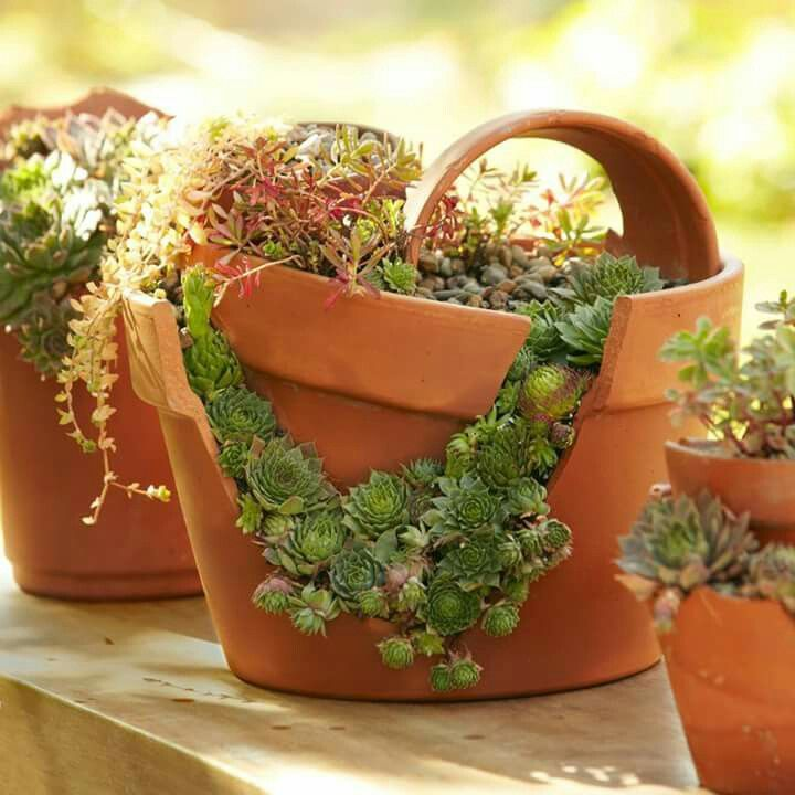 How To Plant A Cracked Pot Succulent Garden