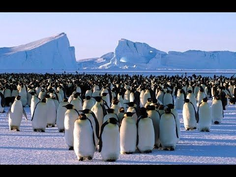 Amazing the north pole  documentary