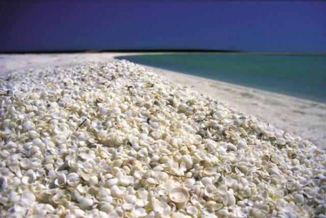 Shell Beach - Shark's Bay, Αυστραλία Η παραλία των κοχυλιών δε μοιάζει με καμία άλλη παραλία στον κόσμο. Είναι καλυμμένη με τρισεκατομμύρια μικρά, λευκά κοχύλια, που σε ορισμένα σημεία φτάνουν και τα 10 μέτρα σε βάθος, σύμφωνα με το αυστραλιανό γραφείο τουρισμού.