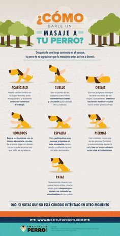 masaje para perro