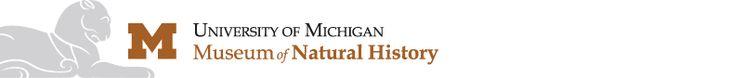University of Michigan Museum of Natural History | University of Michigan