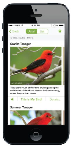 Merlin is a FREE bird identification app  available to instantly identify 285 North American birds by size, color, habits, and sounds