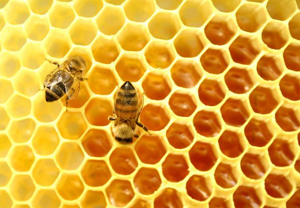 die besten 25 honigbienen ideen auf pinterest bienen bienenhaltung und bienen freundliche blumen. Black Bedroom Furniture Sets. Home Design Ideas