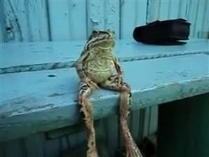 Kermit, is that you? Frog sits on bench like a human