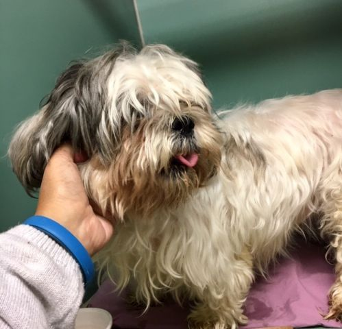 SARA - 9623 - - Manhattan  TO BE DESTROYED 10/21/17  **ON PUBLIC LIST** -  Click for info & Current Status: http://nycdogs.urgentpodr.org/sara-9623/