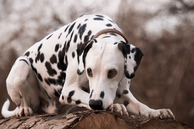 The 20 Most High Maintenance Dog Breeds Dog Breeds Most Cutest